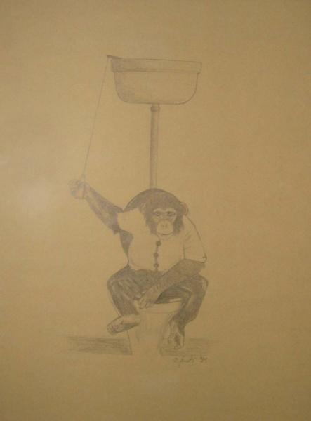 Affe am Klo - Monkey on toilet